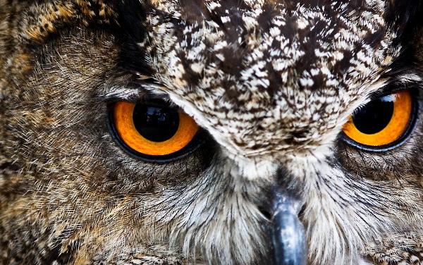 Внимание: виды, свойства, нарушения, развитие