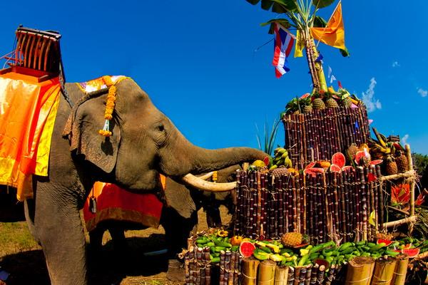 День слонов в Таиланде