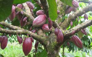 Сельское хозяйство Гренады