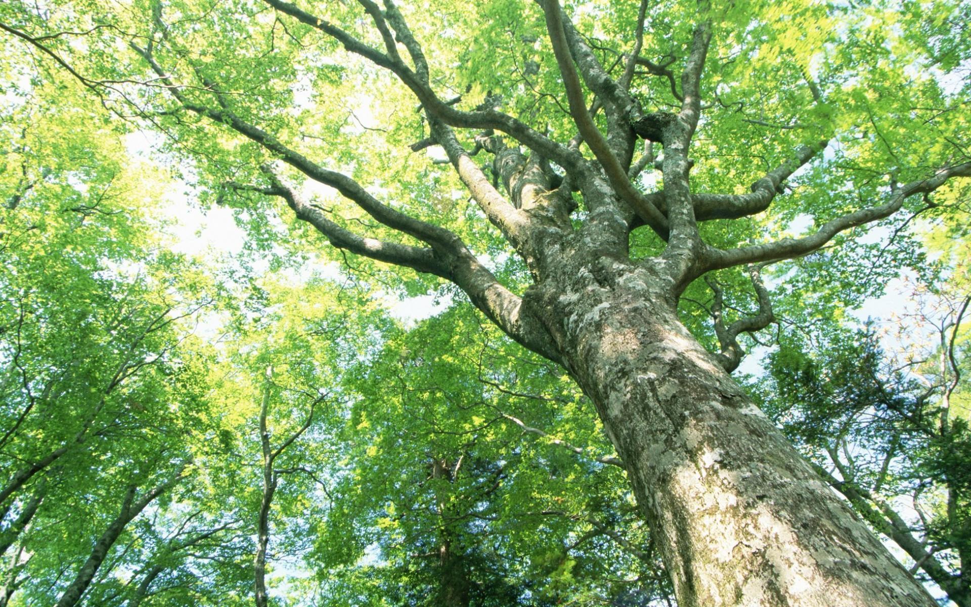 Как залезть на дерево, на котором нет веток?