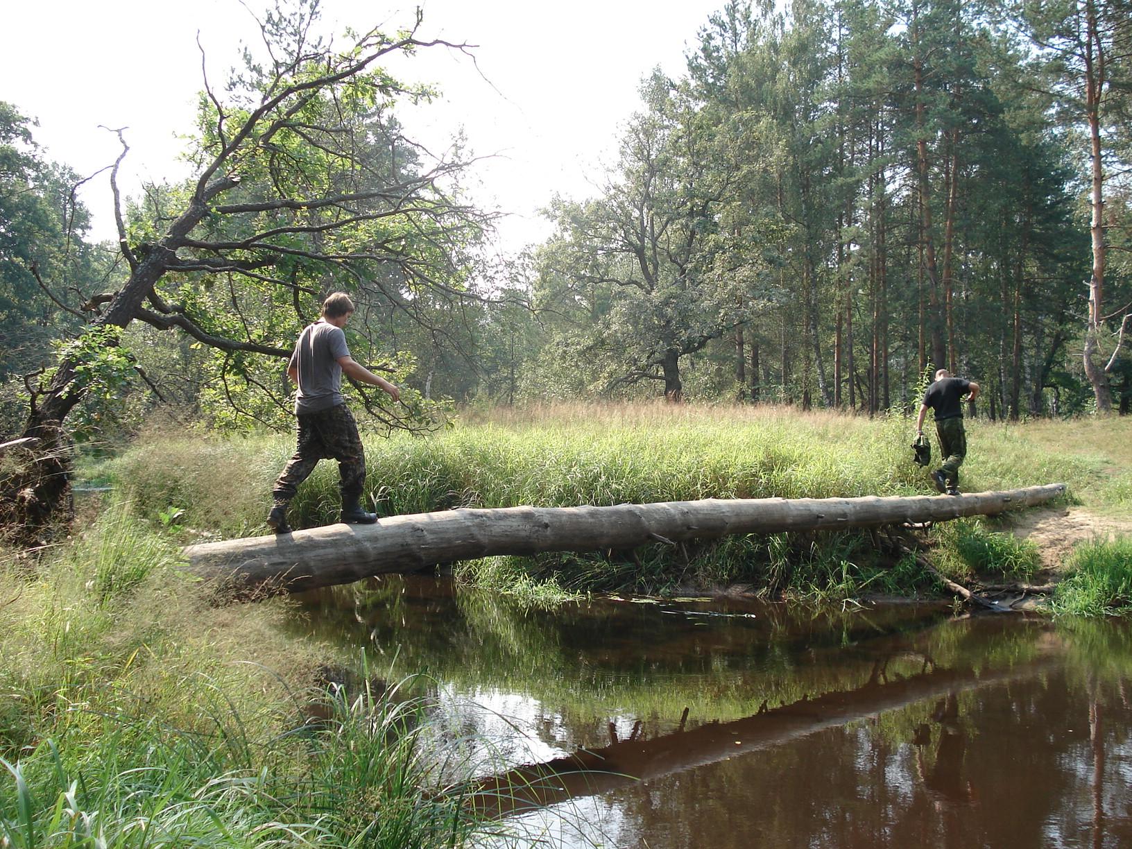 Советы по выживанию. Учимся выживать в лесу